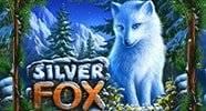 polar_fox2